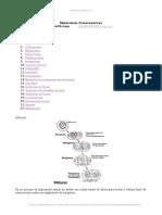 mutaciones-cromosomicas