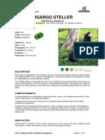 Ficha PIGARGO STELLER_Haliaeetus Pelagicus
