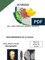 Biologia Celular- Intro