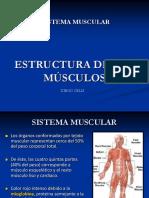 Estructura de Los Músculos