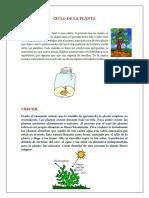 Ciclo de La Planta