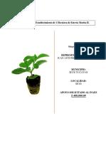 Proyecto de Estevia.docx