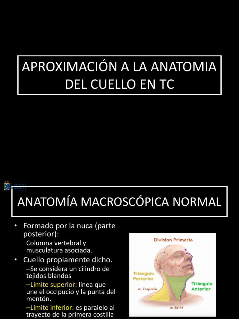 Anatomia Espacios de Cuello