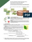 4. GUIA TEJIDOS VEGETALES.docx