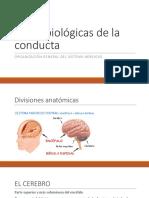Bases Biologicas 4