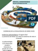La Evolucion Causa La Biodiversidad II