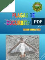 cucurbitaceas.pptx
