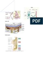 Struktur Neuron Gambar