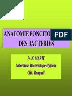 anat_bact_2_P2