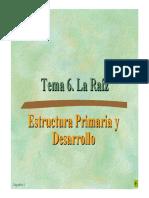 Tema 6a_La Raíz.pdf
