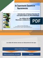 Introducción Al Sistema Nervioso II - Neuronas