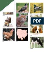 Animales Domesticos Caqchiquel