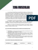 Manual de Anatomia Muscular