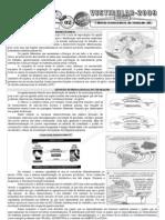 Geografia - Pré-Vestibular Impacto - Divisão Internacional do Trabalho DIT