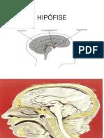 Tumores Hipofisários