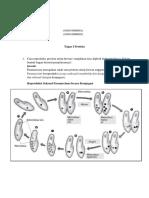 Tugas Protista1