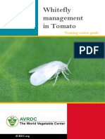 Whitefly Management in Tomato South Asia