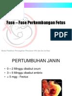 3. Fase – Fase Perkembangan Fetus