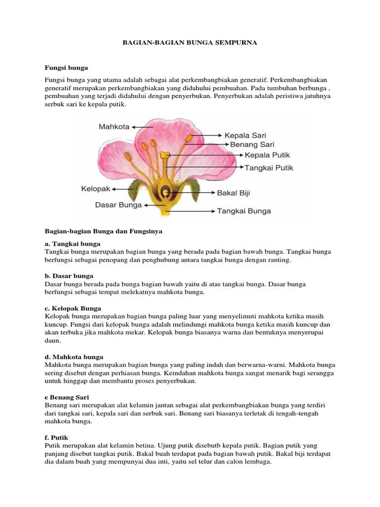 Gambar Bunga Alat Kelamin Jantan Dan Betina Koleksi Gambar Bunga