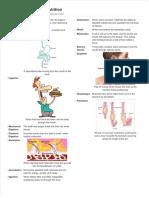 Animal Nutrition IGCSE Notes