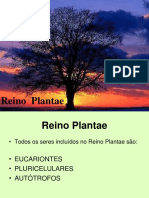 Reino Plantae Power Poin