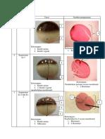 Data Pengamtan Perkembangan Embrio Katak