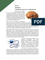 Bases Neurologicas