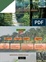 TEMA-12-Defectos-en-la-madera-rolliza.pdf