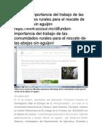 Difunden Importancia Del Trabajo de Las Comunidades Rurales Para El Rescate de Las Abejas Sin Aguijón Https