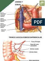 Arterias Del Abdomen