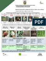 Enfermedades e insectos de la mora de castilla.pdf