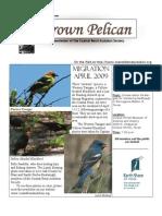 May-June 2009 Brown Pelican Newsletter Coastal Bend Audubon Society