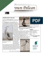 July-August 2009 Brown Pelican Newsletter Coastal Bend Audubon Society