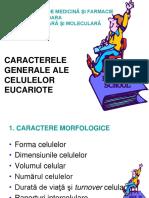 caracterele generale ale cel EK.ppt