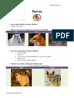 esp.desarrolladaperros.pdf