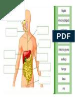 aparto digestivo