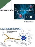 Neurociencia. Mecanismos de Transmisión Neuronal. Dra. Iraima V  Martínez M