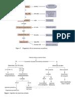 ALGORITMO AMENORREA.pdf