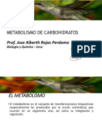 2.3 Metabolismo de Carbohidratos