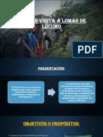 Informe Visita a Lomas de Lúcumo