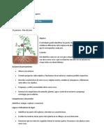La Planta y Sus Partes - 3er Grado