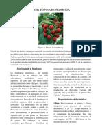 Ficha Técnica de Frambuesa