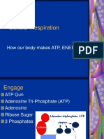 26 Biology 2-16-08 Cellular Respiration