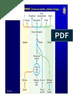 Aula_16_gliconeogenese_I.pdf