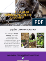 Tráfico Ilegal de Fauna Silvestre en Colombia