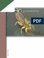 1 Ephemeroptera Grupo 1 y 2