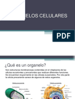 Organelos_celulares.pdf