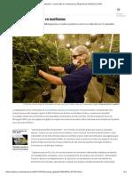 ¿Estudios__ Licenciado en Marihuana _ Blog Mundo Global _ EL PAÍS
