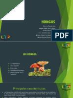 HONGOS-Next.pptx (1)