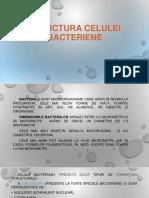 Structura celulei bacteriene